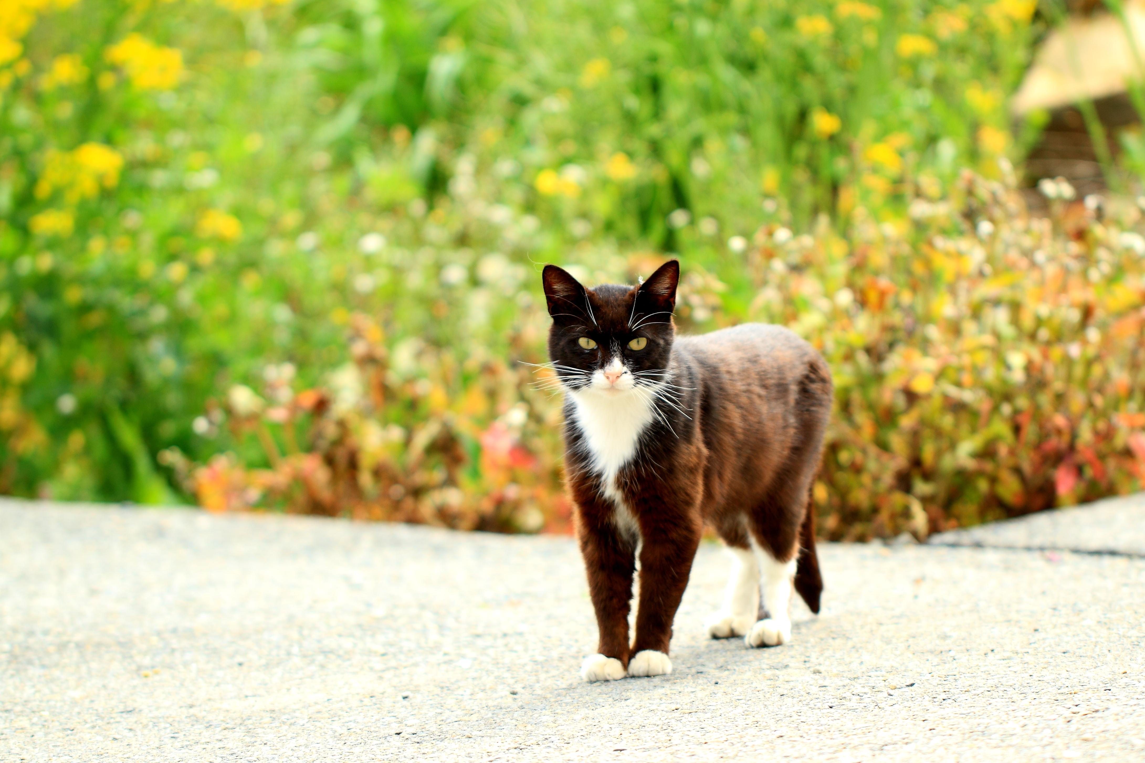 花のなかでまっすぐ見つめる黒猫